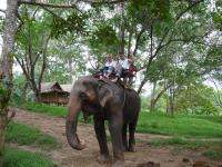 elephant-riding-3