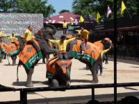 elephants-show-1