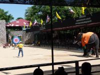 elephants-show-2