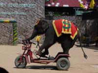elephants-show-3