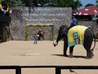 elephants-show-4