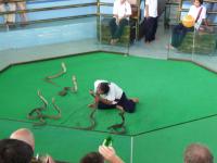 snake-show-1