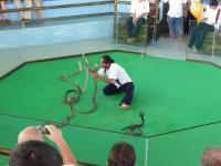 snake-show-2